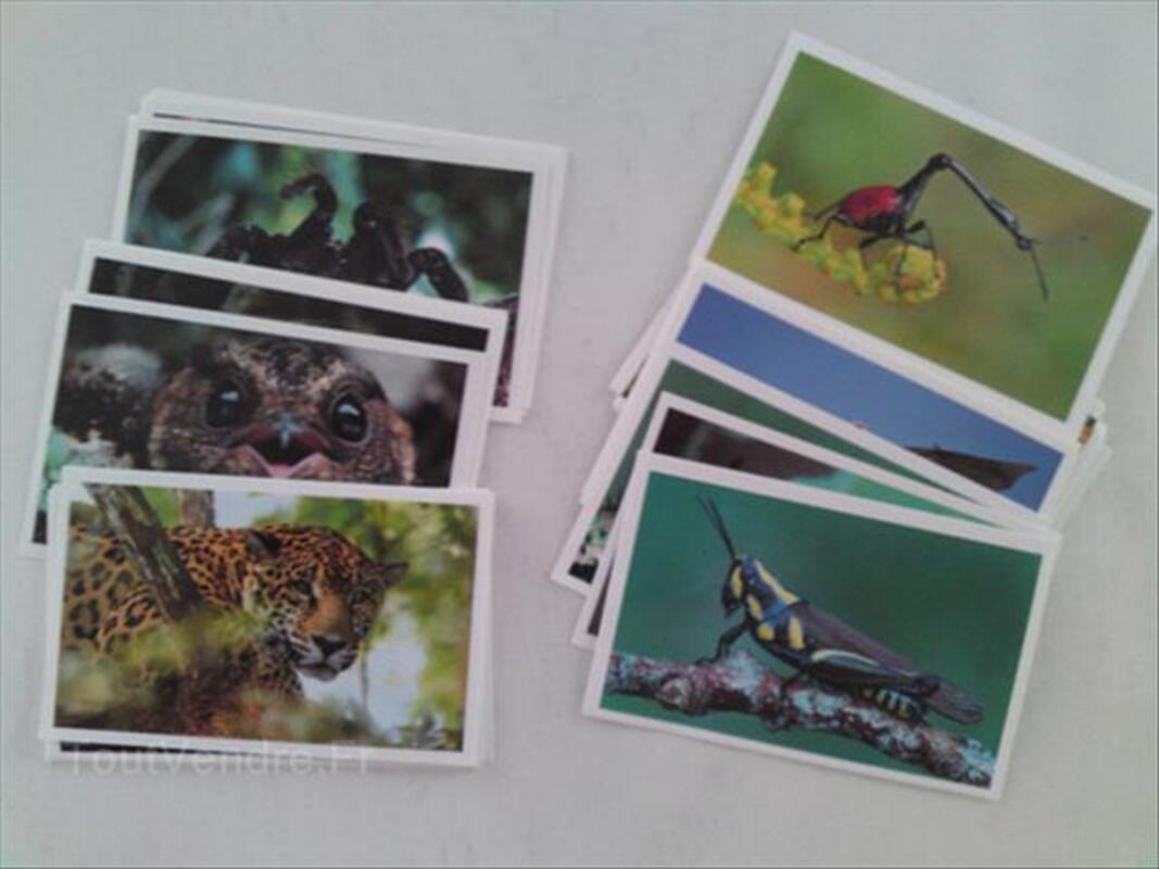 40 vignettes images auchan jungle mania 55828116