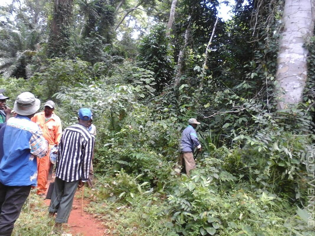500 hectares de terrain agricole à louer à Mengang / Camerou 784094981