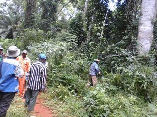 500 hectares de terrain agricole à louer à Mengang / Camerou