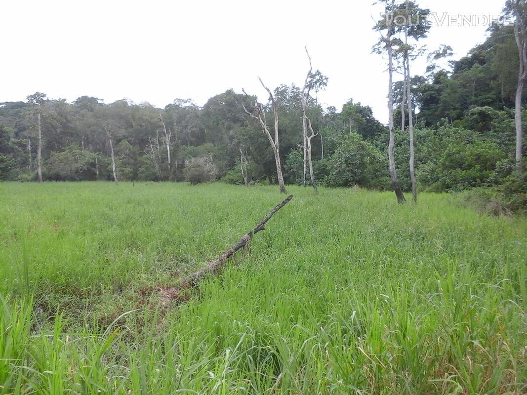 500 hectares de terrain agricole à louer à Mengang / Camerou 784094984