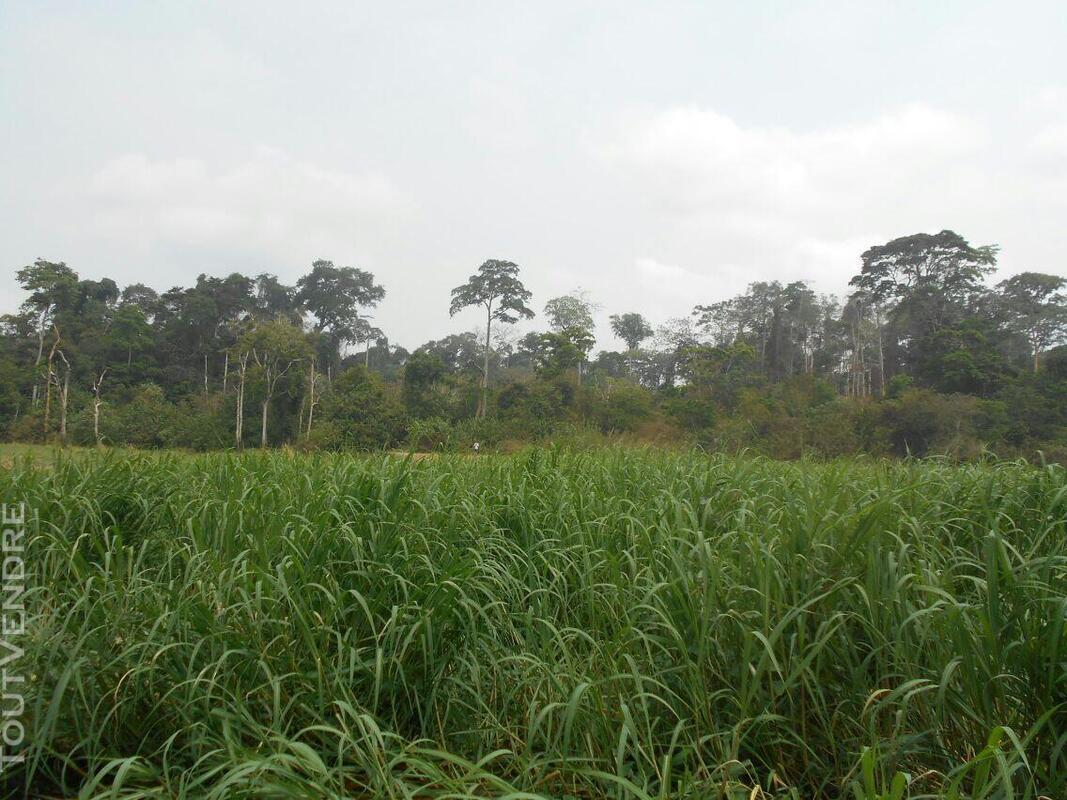500 hectares de terrain agricole à louer à Mengang / Camerou 784094990