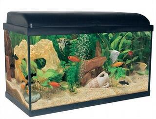 Aquarium noir 54 litres avec éclairage LED