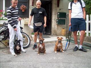 Association de dressage éducation canine