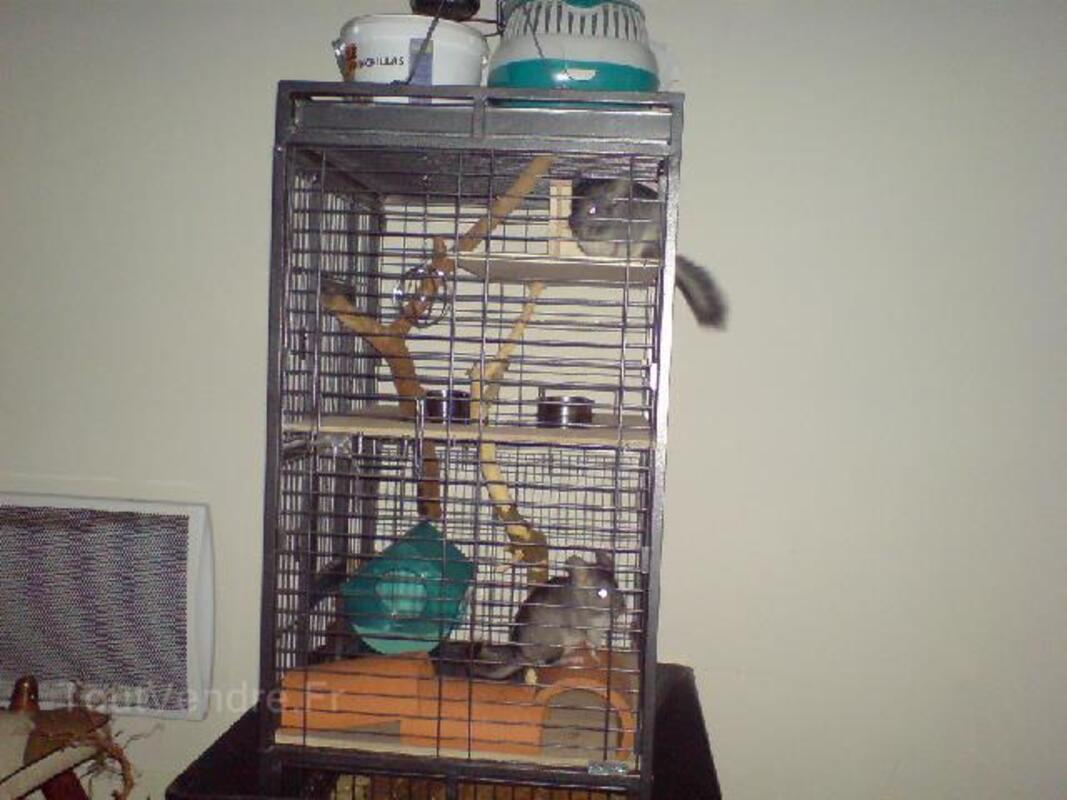 Cage a perroquet 93179244