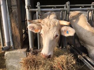 Colis viande à la ferme