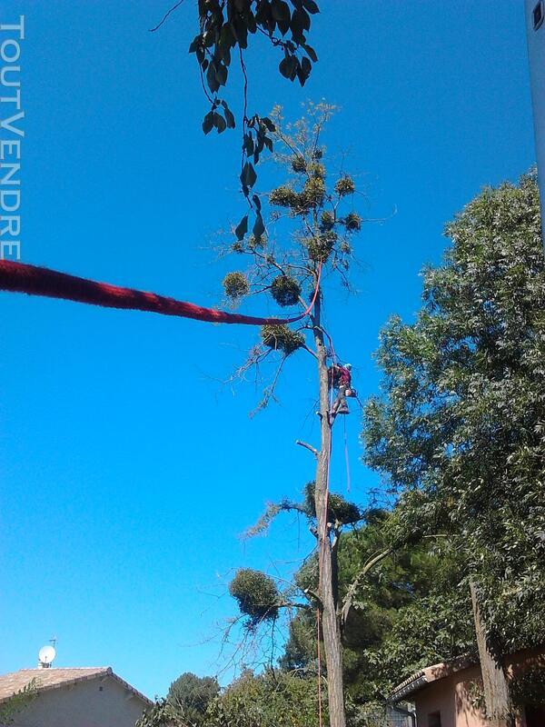 Entreprise d'élagage et abattage d'arbres Carcassonne Aude 240385544