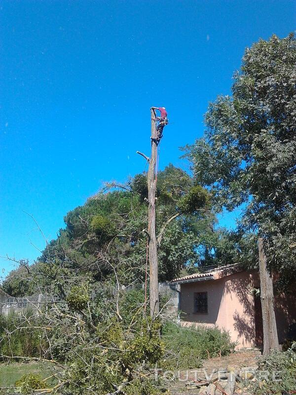 Entreprise d'élagage et abattage d'arbres Carcassonne Aude 240385548