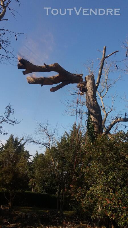 Entreprise d'élagage et abattage d'arbres Carcassonne Aude 240385552