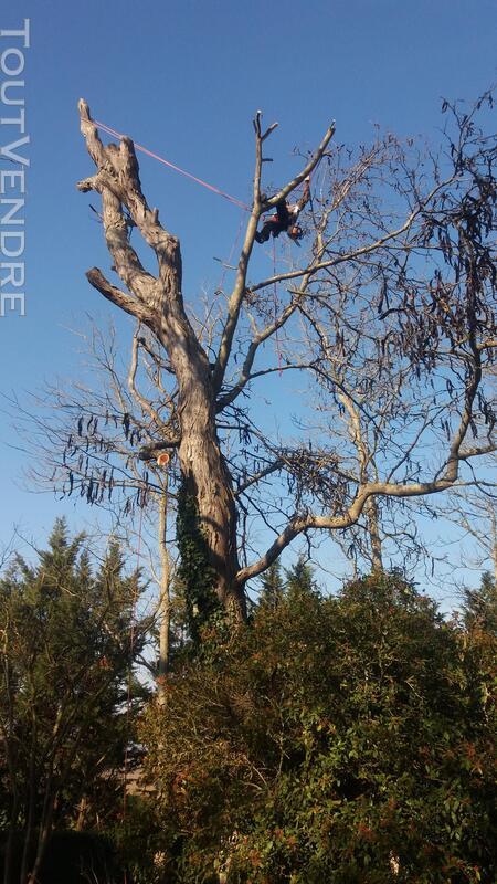 Entreprise d'élagage et abattage d'arbres Carcassonne Aude 240385554