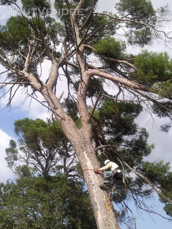 Entreprise d'élagage et abattage d'arbres Carcassonne Aude 240385556