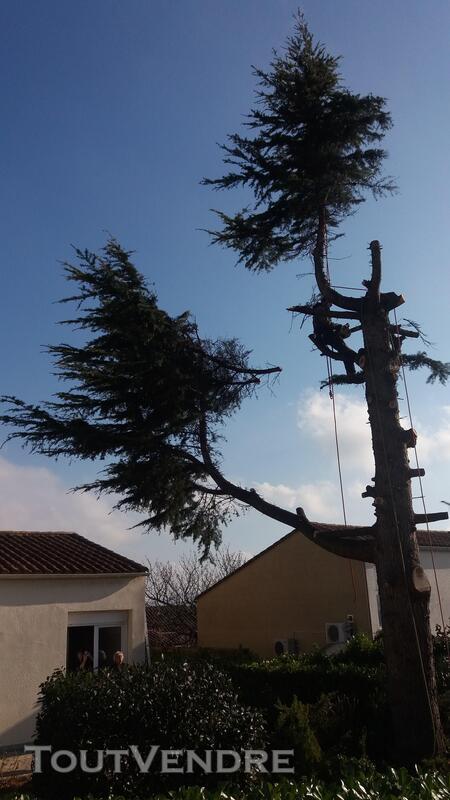 Entreprise d'élagage et abattage d'arbres Carcassonne Aude 240385564