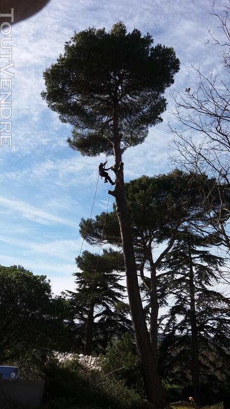 Entreprise d'élagage et abattage d'arbres Carcassonne Aude 240385580