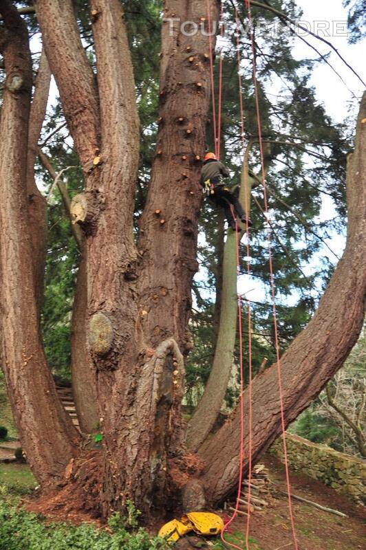 Entreprise d'élagage et abattage d'arbres Carcassonne Aude 240385586