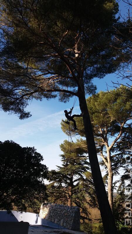 Entreprise d'élagage et abattage d'arbres Carcassonne Aude 240385588
