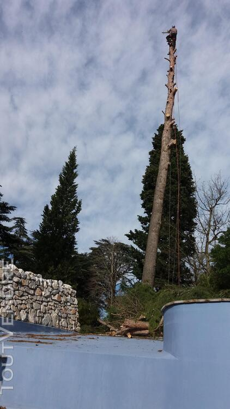Entreprise d'élagage et abattage d'arbres Carcassonne Aude 240385590