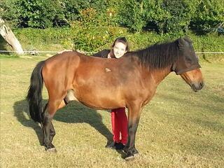 Entretien cheval