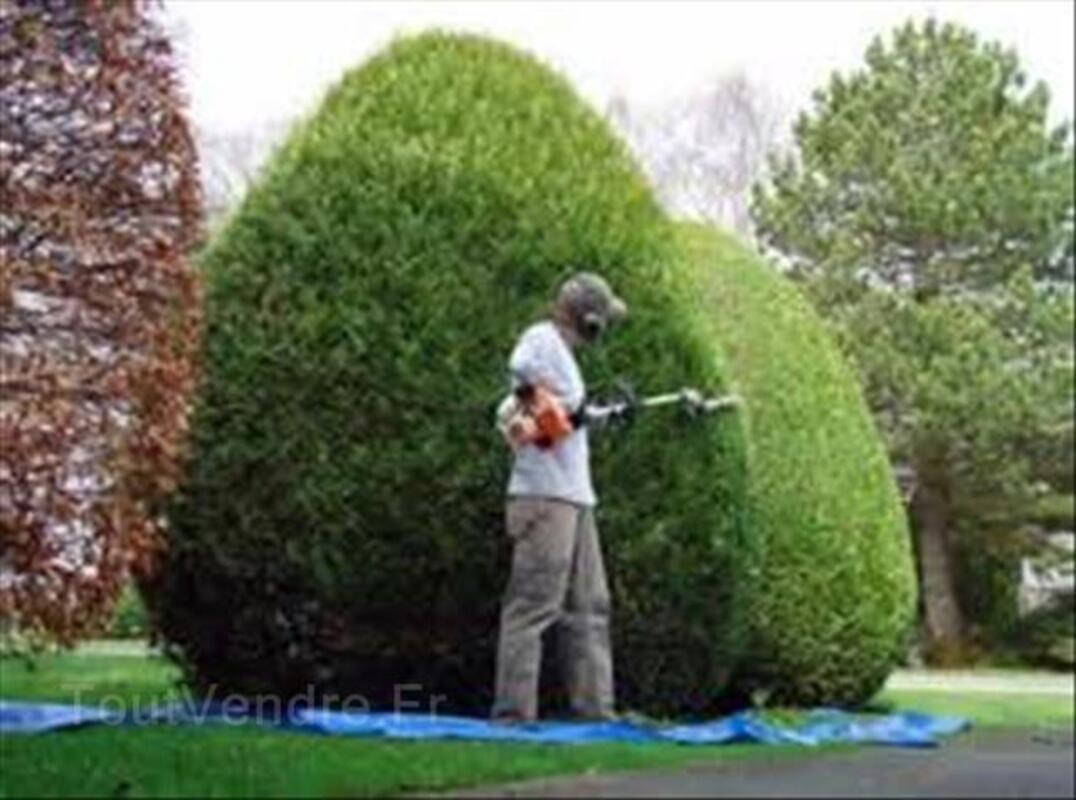 Entretien d'espaces vert: taille de haie, tonte... 101009241
