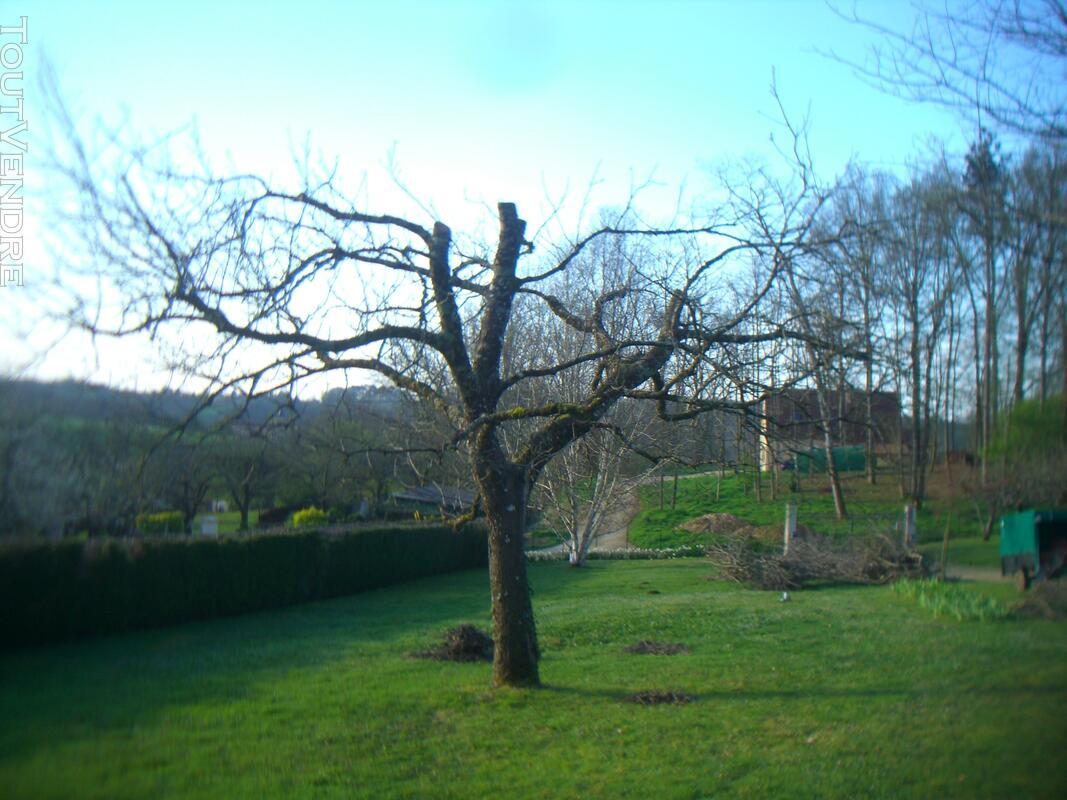 Entretien parcs et jardins 123170789