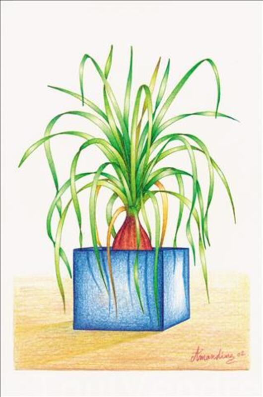 FLEURS ET PLANTES TROPICALES 42567017