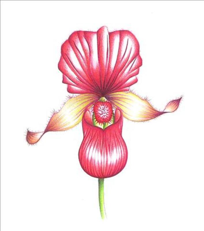 FLEURS ET PLANTES TROPICALES 42567018