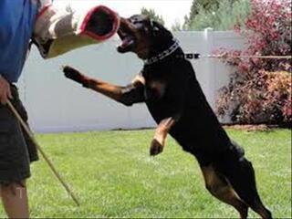 Gardien avec chiens de garde