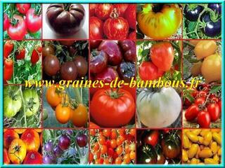 Graines de Tomates non traitées