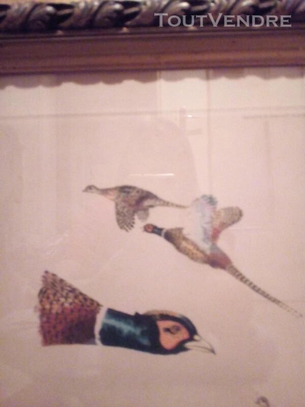 Lithographie animalière têtes de faisan 152434010