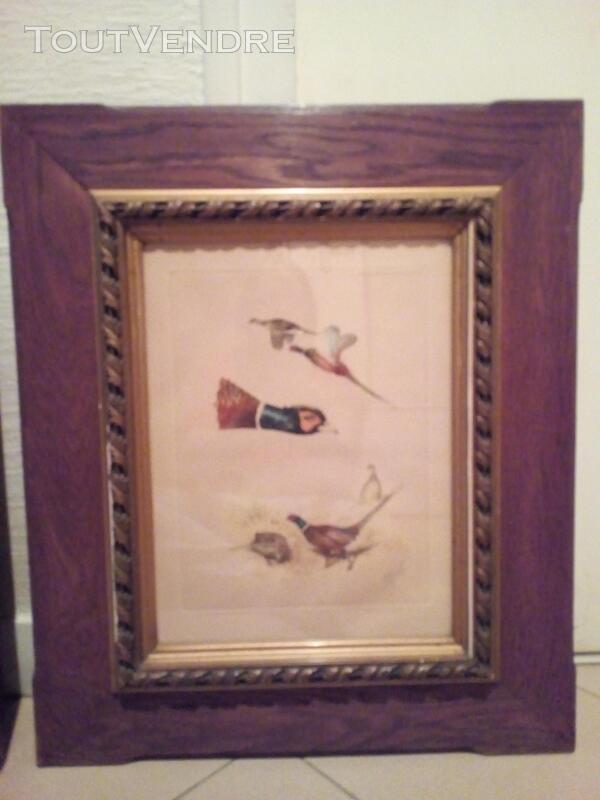 Lithographie animalière têtes de faisan 152434013