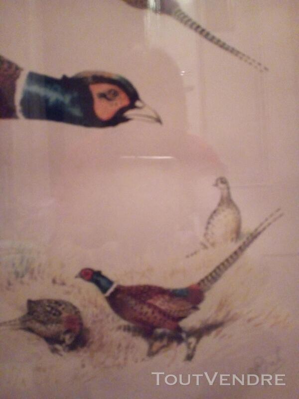 Lithographie animalière têtes de faisan 152434016