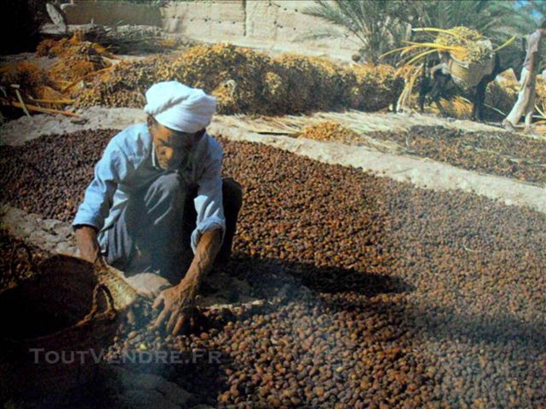 Livre d'or du Maroc 78414811