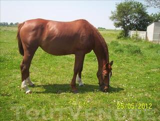 Pension de chevaux 115 euros