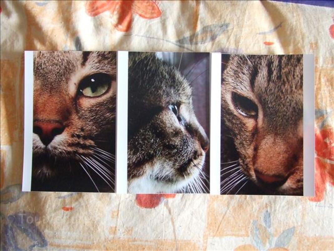 Photos de chats gros plans tirages pros 24386012