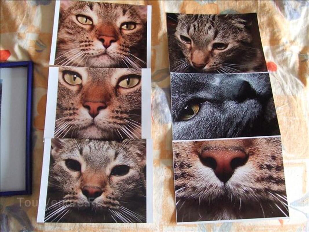Photos de chats gros plans tirages pros 24386121