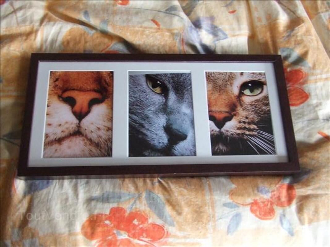 Photos de chats gros plans tirages pros 24386313