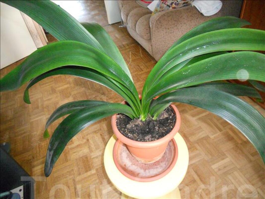 Plantes verte 70924183