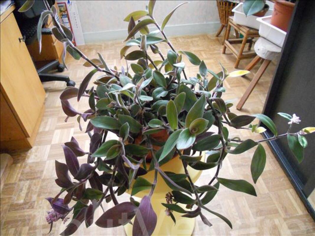 Plantes verte 70924305