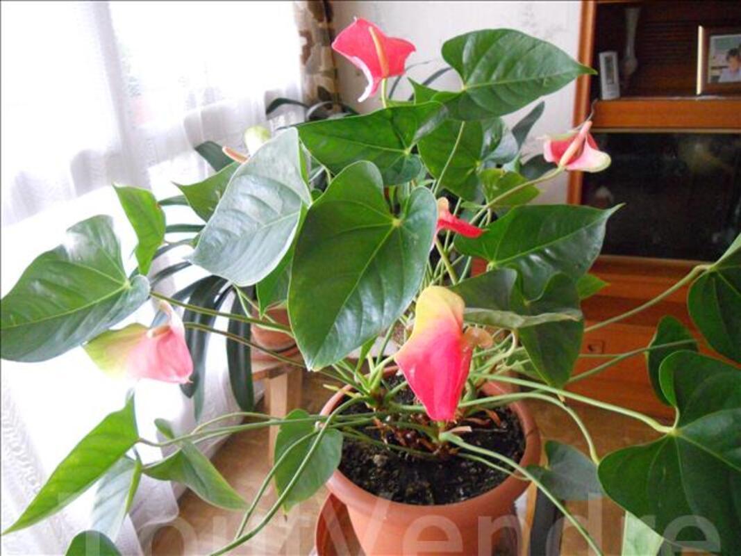 Plantes verte 70924452