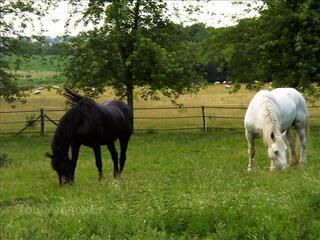 Propose pension pour chevaux & poneys