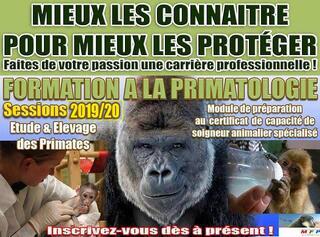 STAGE DE PRIMATOLOGIE Étude & Élevage des Primates 2019/2020