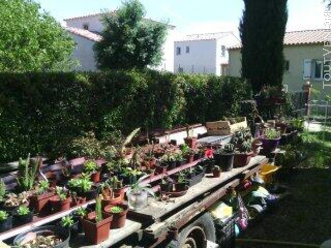 Succulentes 664363717
