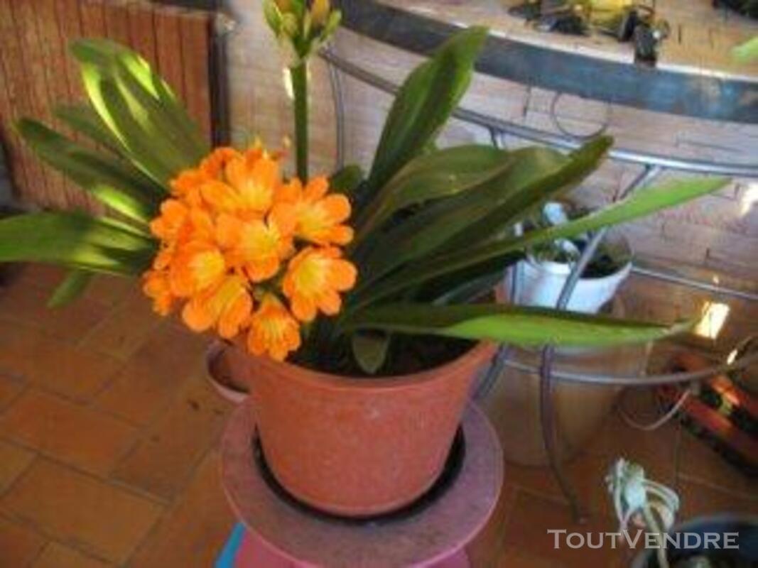 Succulentes 664363783