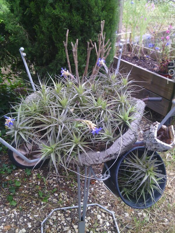 Succulentes 664364272