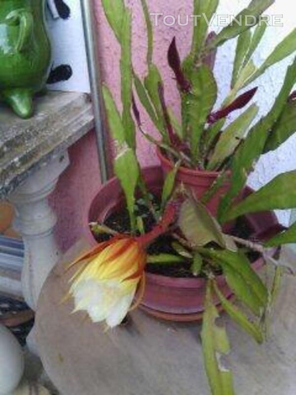 Succulentes 664370254