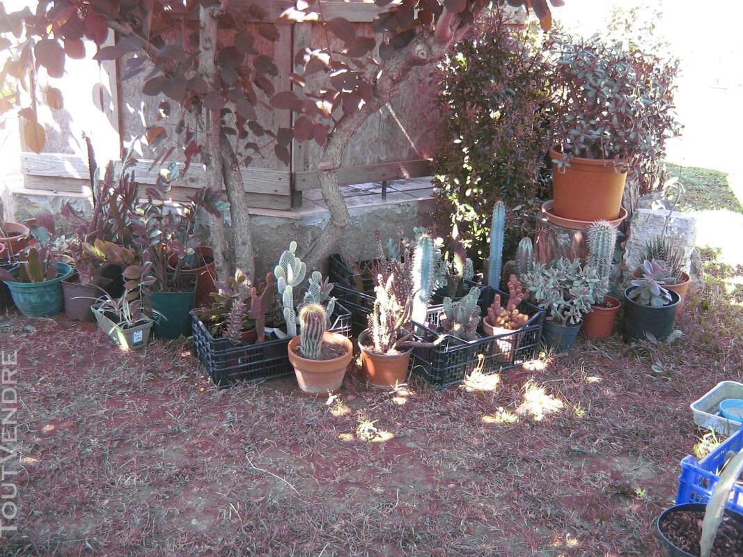 Succulentes 664373893