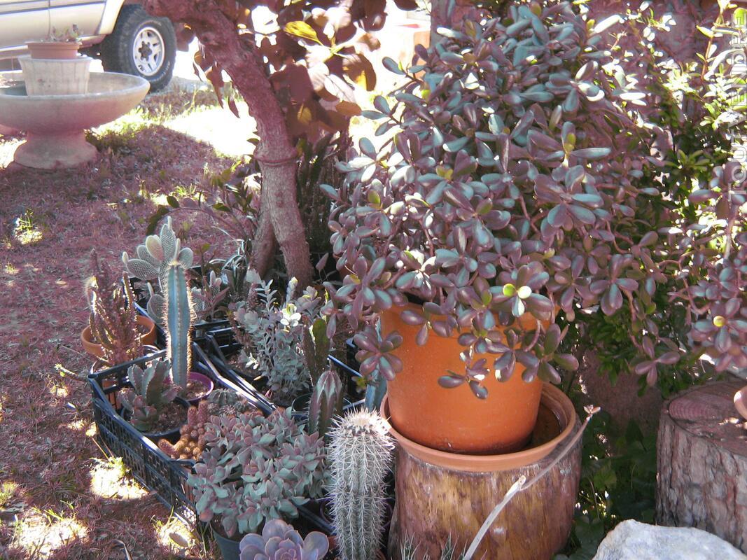 Succulentes 664378729