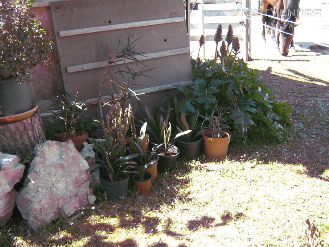 Succulentes 664378861