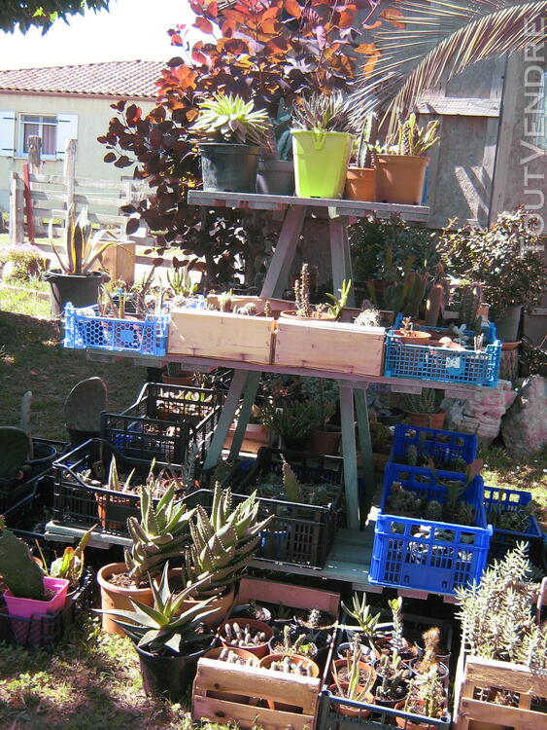 Succulentes 664379014
