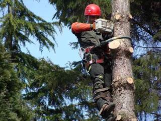 Techni.arbres - élagueur grimpeur
