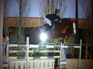 URGENT cheval/jument de sport