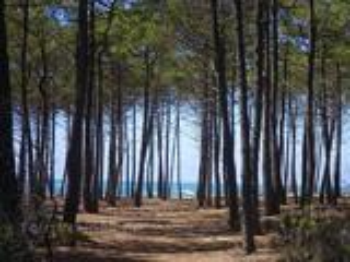 Vacances low cost : Océan, camping 3 étoiles